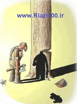 قطع کردن درخت