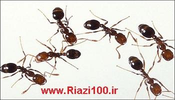 حشره ایی به نام مورچه