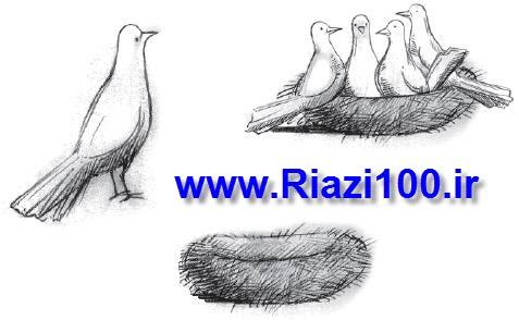 اصل لانه کبوتری
