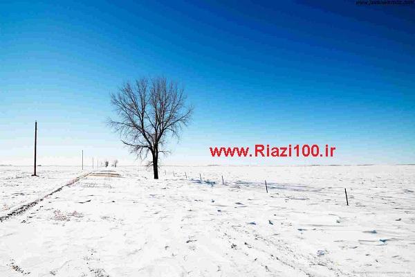 درخت گلابی در زمستان